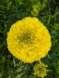Желтый цветок в зеленом цвете стоковое фото rf