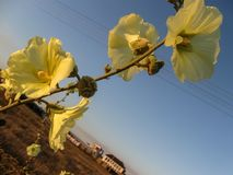Желтый цветок в лугах стоковая фотография rf