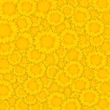 Желтый цветок в предпосылке Стоковое фото RF