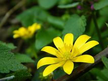 Желтый цветок в режиме макроса Стоковая Фотография RF