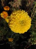 Желтый цветок и красивое дерево Стоковое Фото