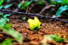 Желтый цветок на земле Стоковые Изображения RF