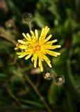 Желтый цветок на предпосылке запачканной зеленым цветом Стоковые Изображения RF