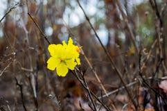 Желтый цветок на черной предпосылке в лесе стоковые изображения