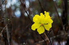 Желтый цветок на черной предпосылке в лесе стоковое фото rf