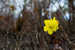 Желтый цветок на черной предпосылке в лесе стоковое изображение rf