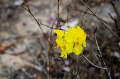Желтый цветок на черной предпосылке в лесе стоковое фото