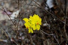 Желтый цветок на черной предпосылке в лесе стоковые изображения rf