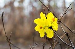 Желтый цветок на черной предпосылке, селективном фокусе стоковое фото