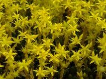 Желтый цветок около поля Стоковые Изображения RF