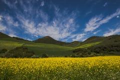 Желтый цветок под облаками Стоковая Фотография