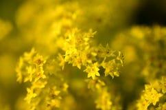 Желтый цветок с расплывчатой предпосылкой стоковые изображения rf