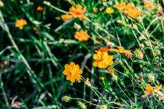 Желтый цветок цветения с расплывчатой предпосылкой на солнечный день стоковые фотографии rf