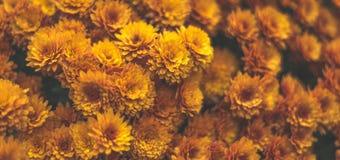 ЖЕЛТЫЙ цветок для предпосылки Стоковое Фото