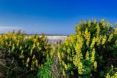 Желтый цветок - amarelas Flores стоковые изображения rf