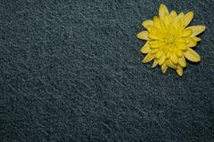 Желтый цветок gerbera на предпосылке текстуры джинсовой ткани пустой дизайн в стиле hippie, boho, Богемии для карт, приглашений, стоковая фотография