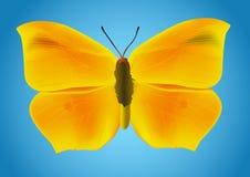 желтый цвет бабочки иллюстрация вектора