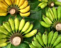 желтый цвет банана зеленый Стоковые Изображения