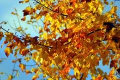 желтый цвет вала листьев осени Стоковые Изображения RF