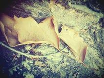 желтый цвет вала листьев падения предпосылки осени стоковое фото