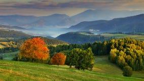 желтый цвет вала неба голубого пасмурного ландшафта поля падения сиротливый Стоковые Изображения RF