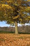 желтый цвет вала осени Стоковое Изображение RF