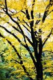желтый цвет вала осени Стоковые Фото
