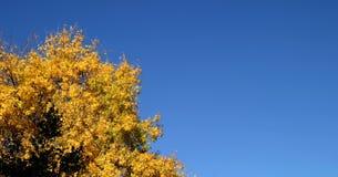 желтый цвет вала осени Стоковое фото RF