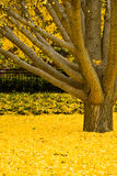 желтый цвет вала Стоковая Фотография RF
