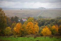 желтый цвет валов листьев осени Стоковые Изображения RF