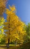 желтый цвет валов парка Стоковые Фото