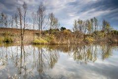 желтый цвет валов пруда ландшафта осени малый Стоковые Изображения