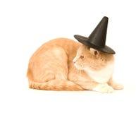 желтый цвет ведьмы шлема кота стоковые изображения