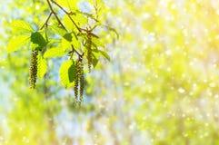 желтый цвет весны лужка одуванчиков предпосылки полный Стоковые Изображения
