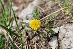 желтый цвет весны цветка dof отмелый стоковые фотографии rf