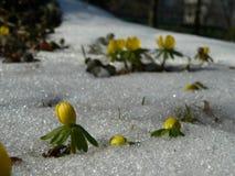 желтый цвет весны цветков Стоковые Изображения RF