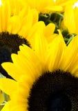 желтый цвет взволнованностей Стоковое Фото