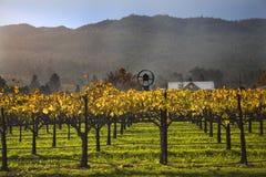 желтый цвет вина виноградников лоз napa падения Стоковые Фотографии RF