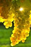 желтый цвет виноградин стоковая фотография rf