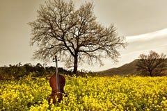 желтый цвет виолончели Стоковое Изображение