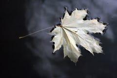 желтый цвет воды листьев Стоковые Изображения