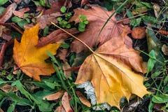 Желтый цвет выходит на зеленую траву в парк Осень стоковое фото