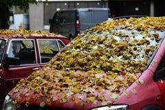 Желтый цвет выходит на клобук и лобовое стекло автомобиля Стоковые Фотографии RF