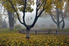Желтый цвет выходит на стенд в парк Стоковые Фото