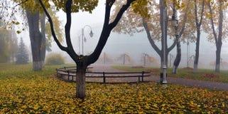 Желтый цвет выходит на стенд в парк Стоковая Фотография