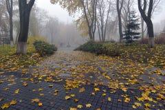 Желтый цвет выходит на стенд в парк Стоковое Изображение RF