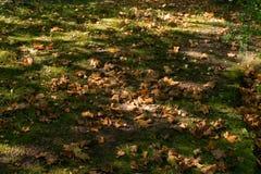 Желтый цвет выходит на том основании и зеленая трава Стоковое Фото