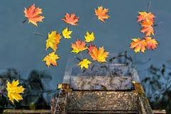 Желтый цвет выходит плавать на воду с отражением в ненастный день осени Стоковая Фотография