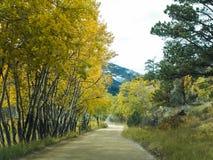 Желтый цвет в горах стоковое фото rf