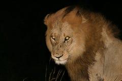 желтый цвет глаз Стоковое фото RF